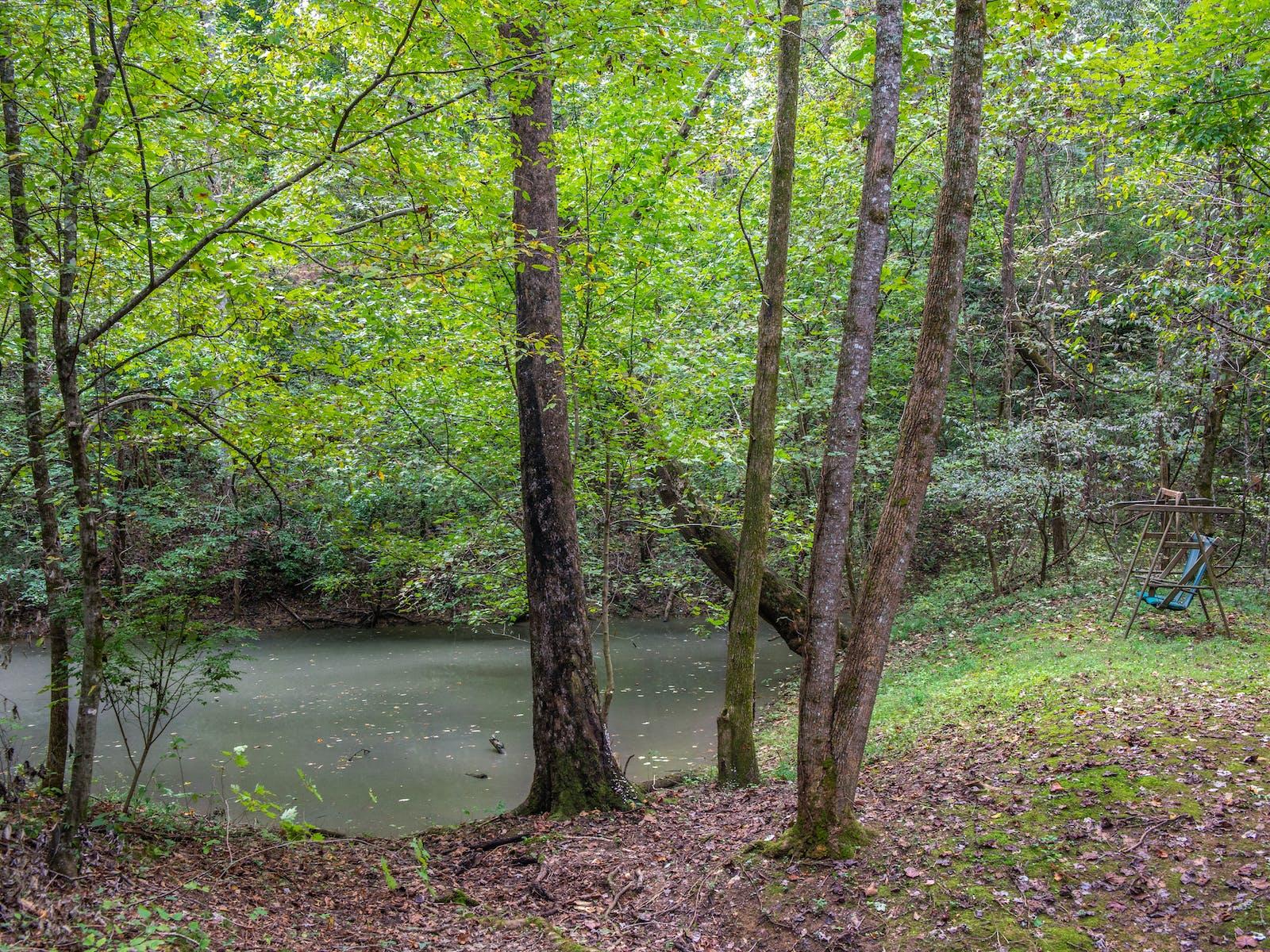 Pet-friendly cabin yard facing the water in Gatlinburg, TN