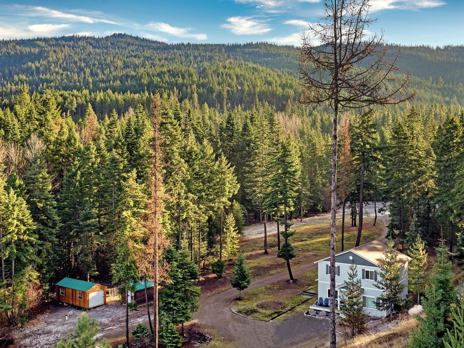 forests of Cle Elum, WA