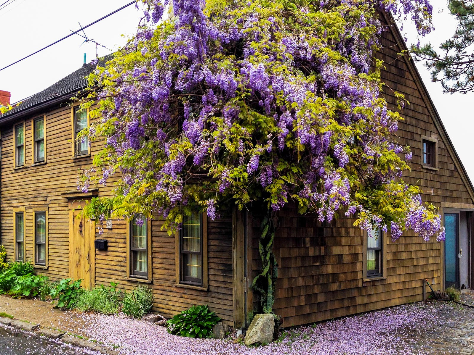 Newburyport, MA vacation rental with purple flowers on the exterior