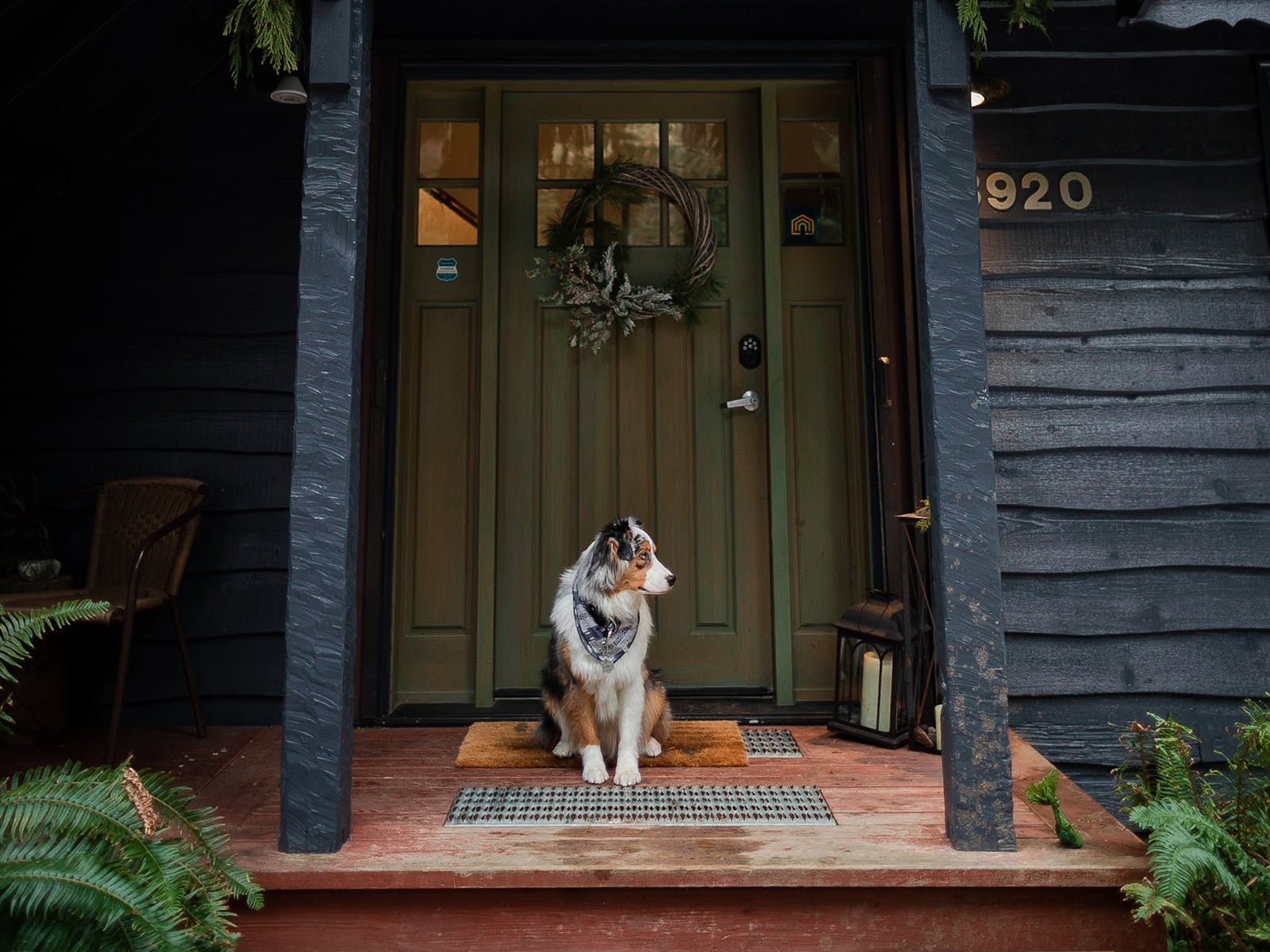 Koda, the Australian Shepherd, sits at the front door of his vacation rental in the North Cascades