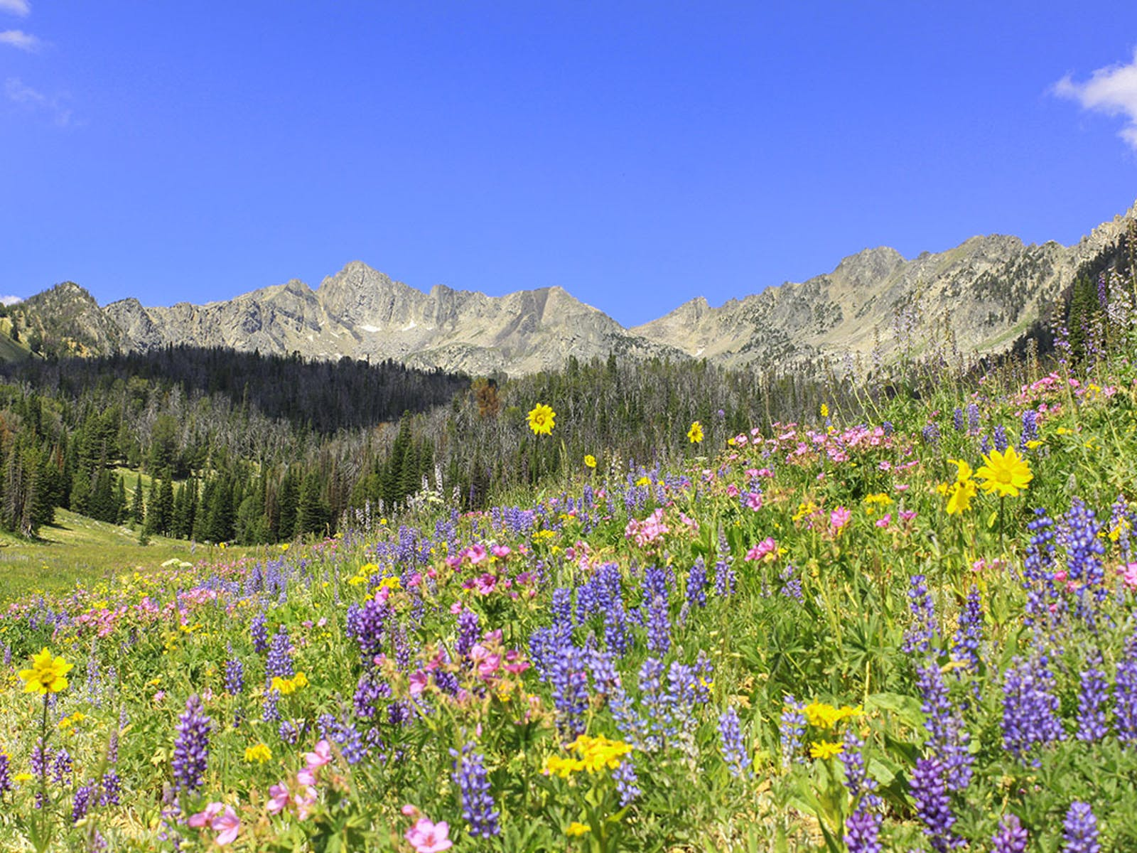 wildflowers and mountains from the Beehive Basin Trail