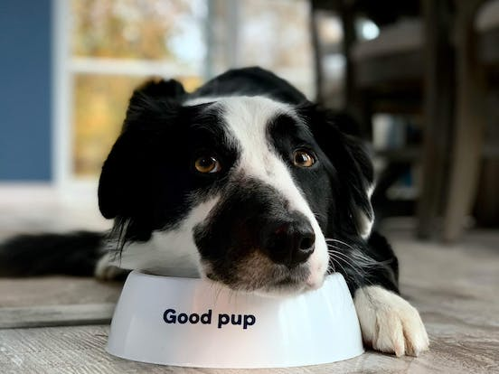 """dog laying on top of food bowl with the words """"Good pup"""" on the bowl"""