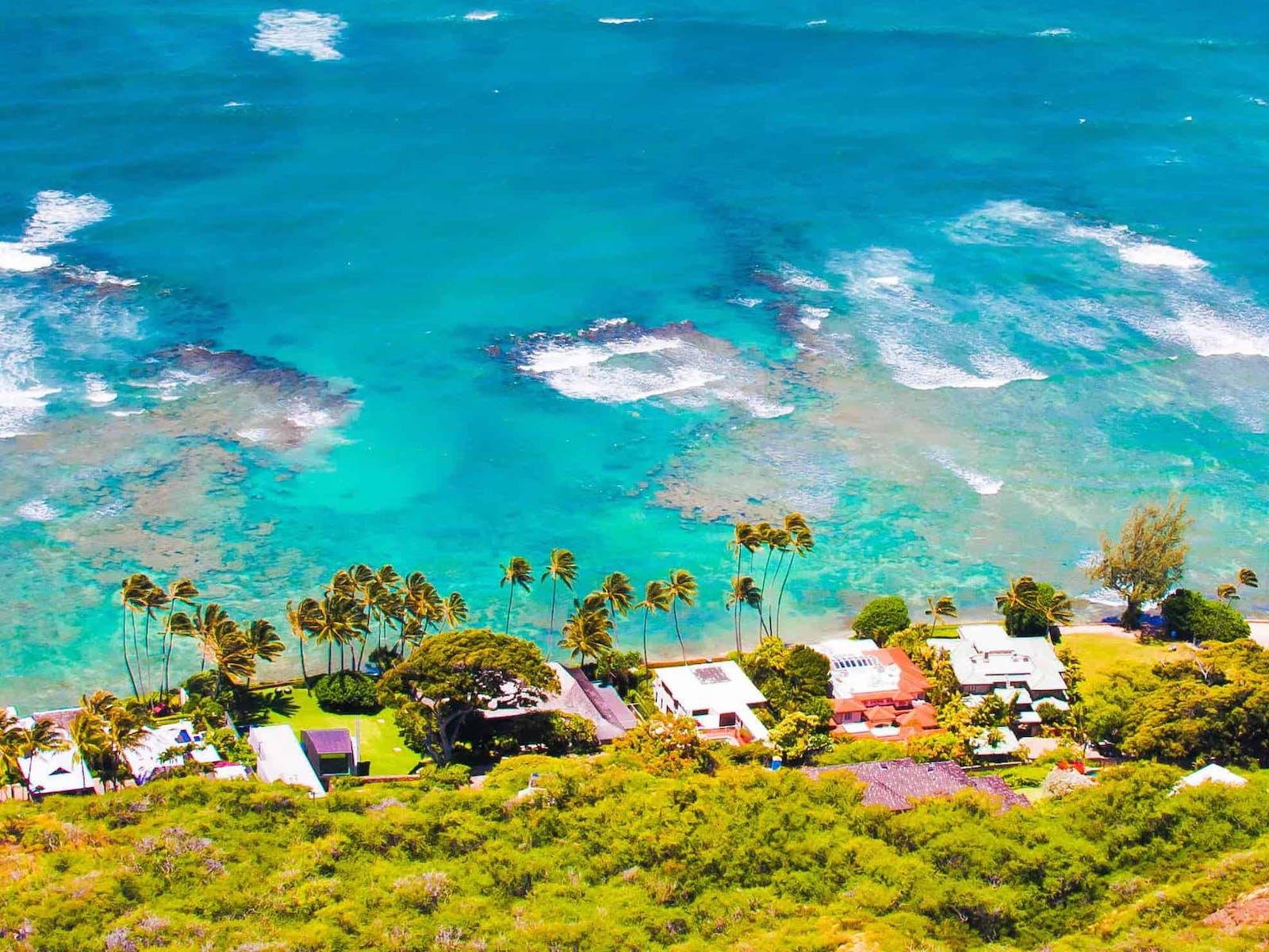 Palm trees and ocean views in north Kona, Hawaii