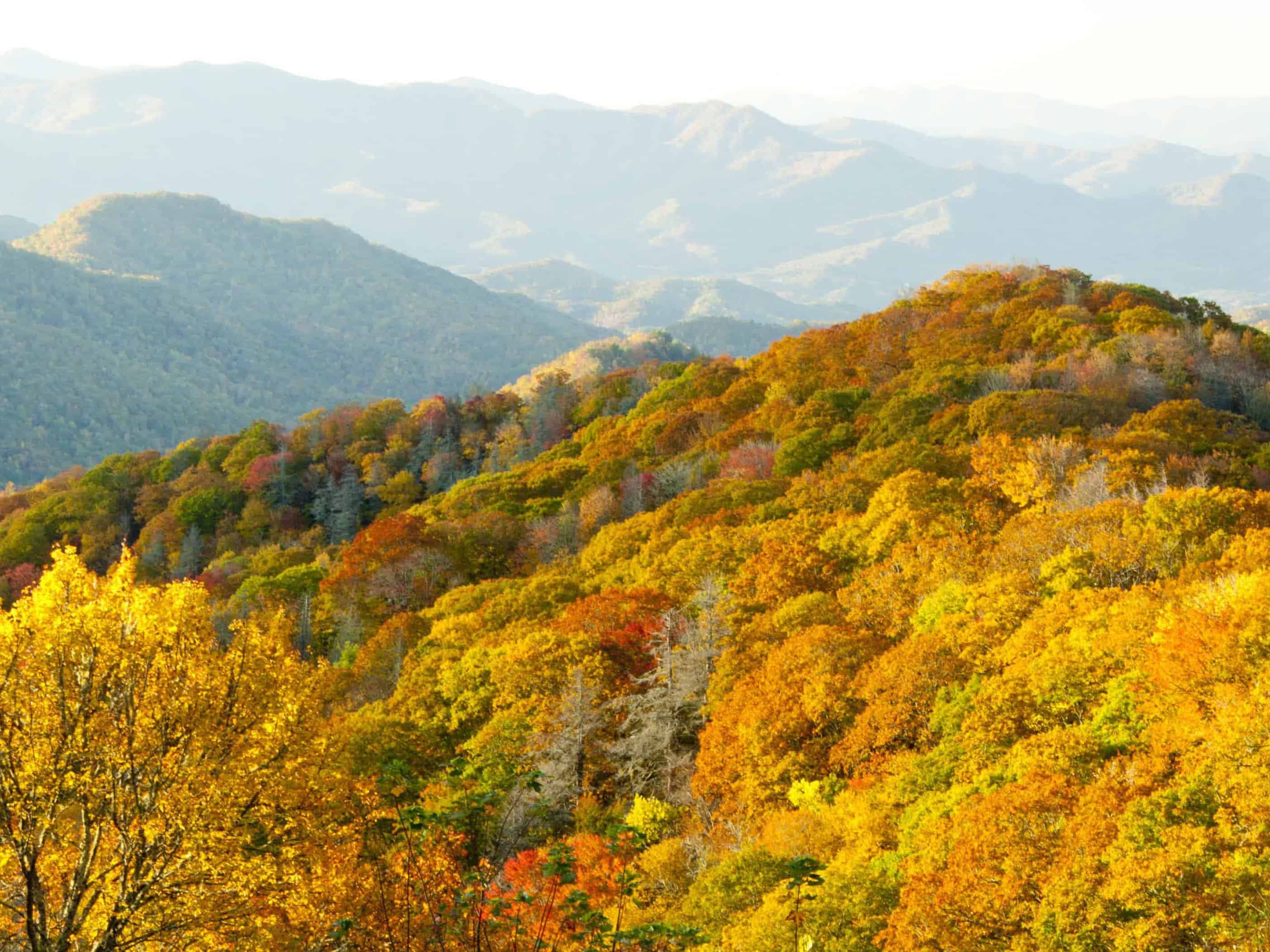 leaves changing color in the smoky mountains, tennessee