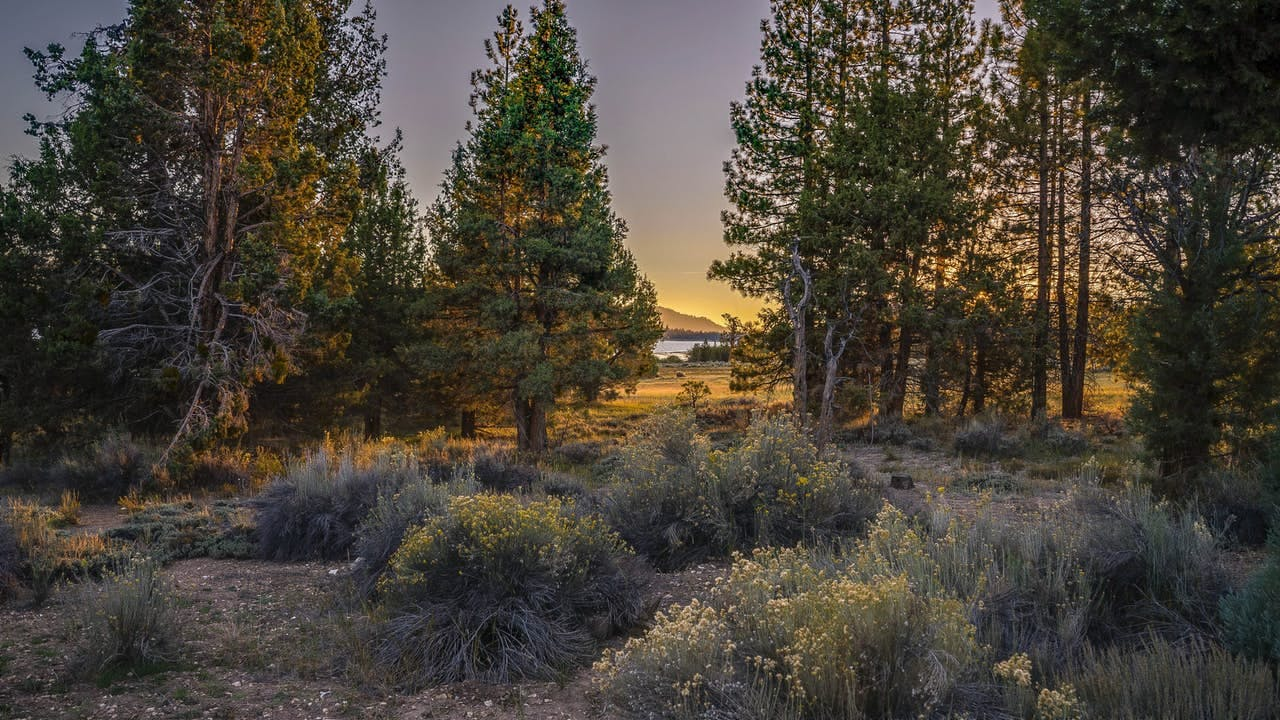 a scenic photo of big bear at sunset