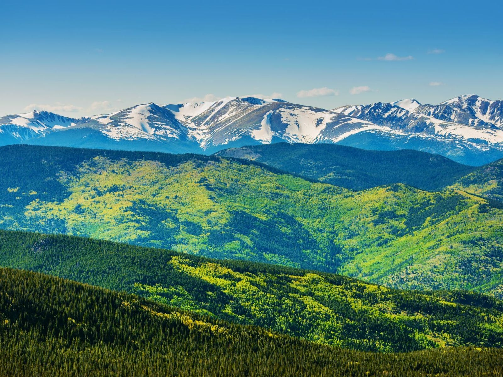 a view of the green forest near breckenridge with the snowy mountains on the horizon