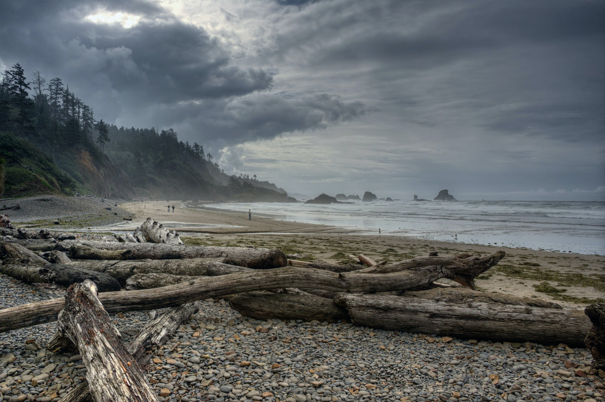 logs washed ashore on Indian Beach