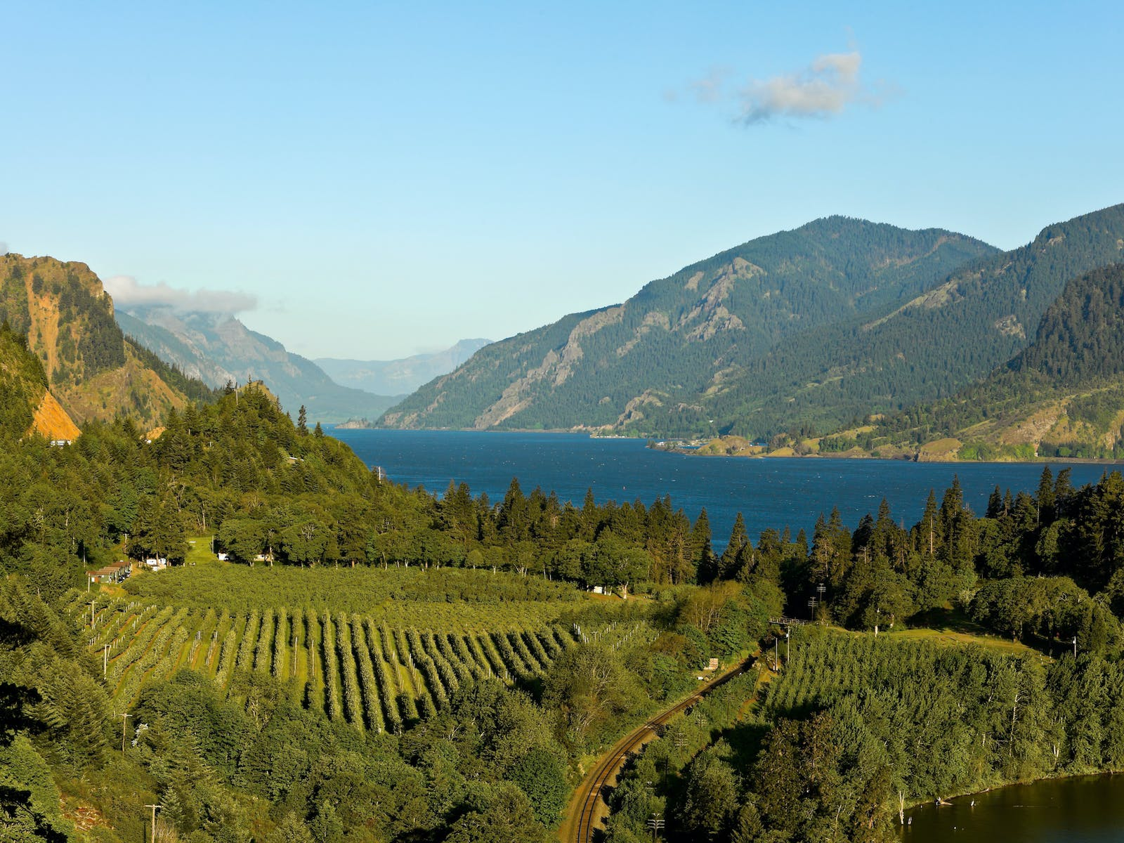 view of vineyards in columbia river gorge