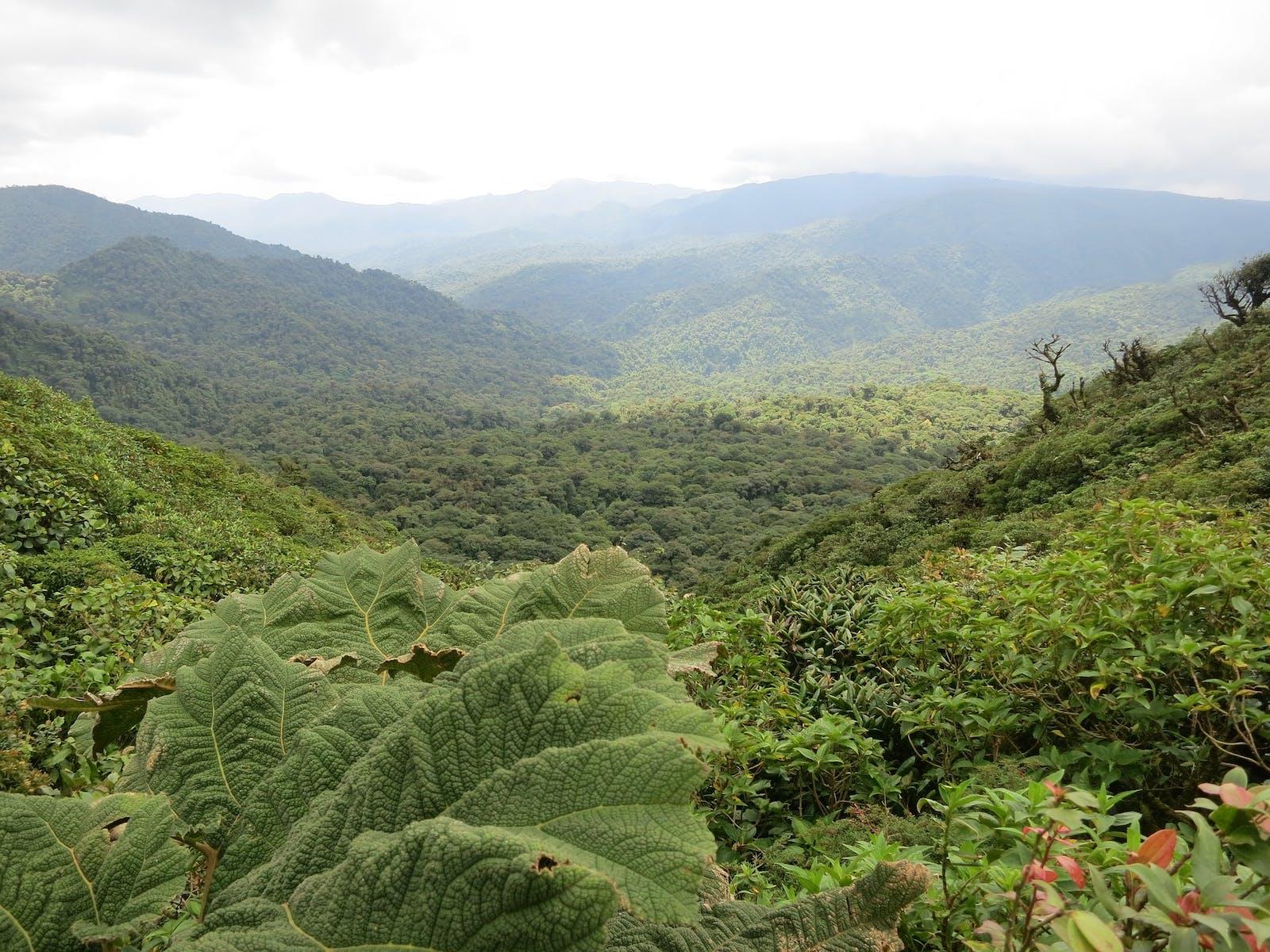Monteverde Forest in Costa Rica