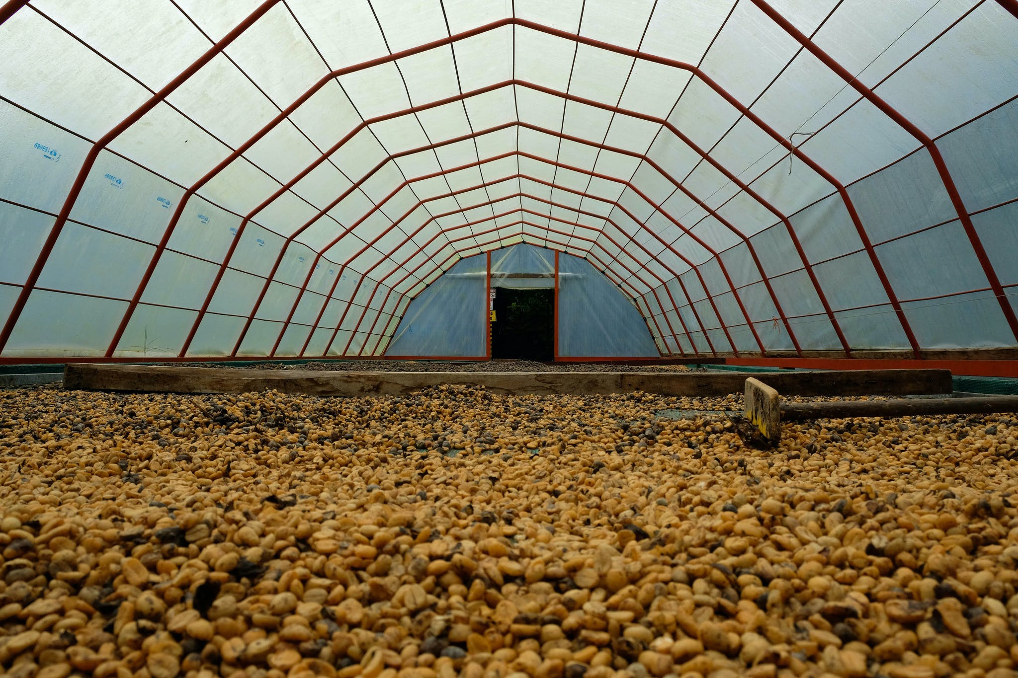 a green house used to harvest coffee beans