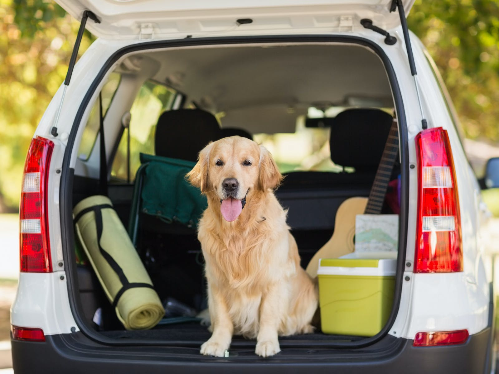 Dog in trunk of car packed with luggage