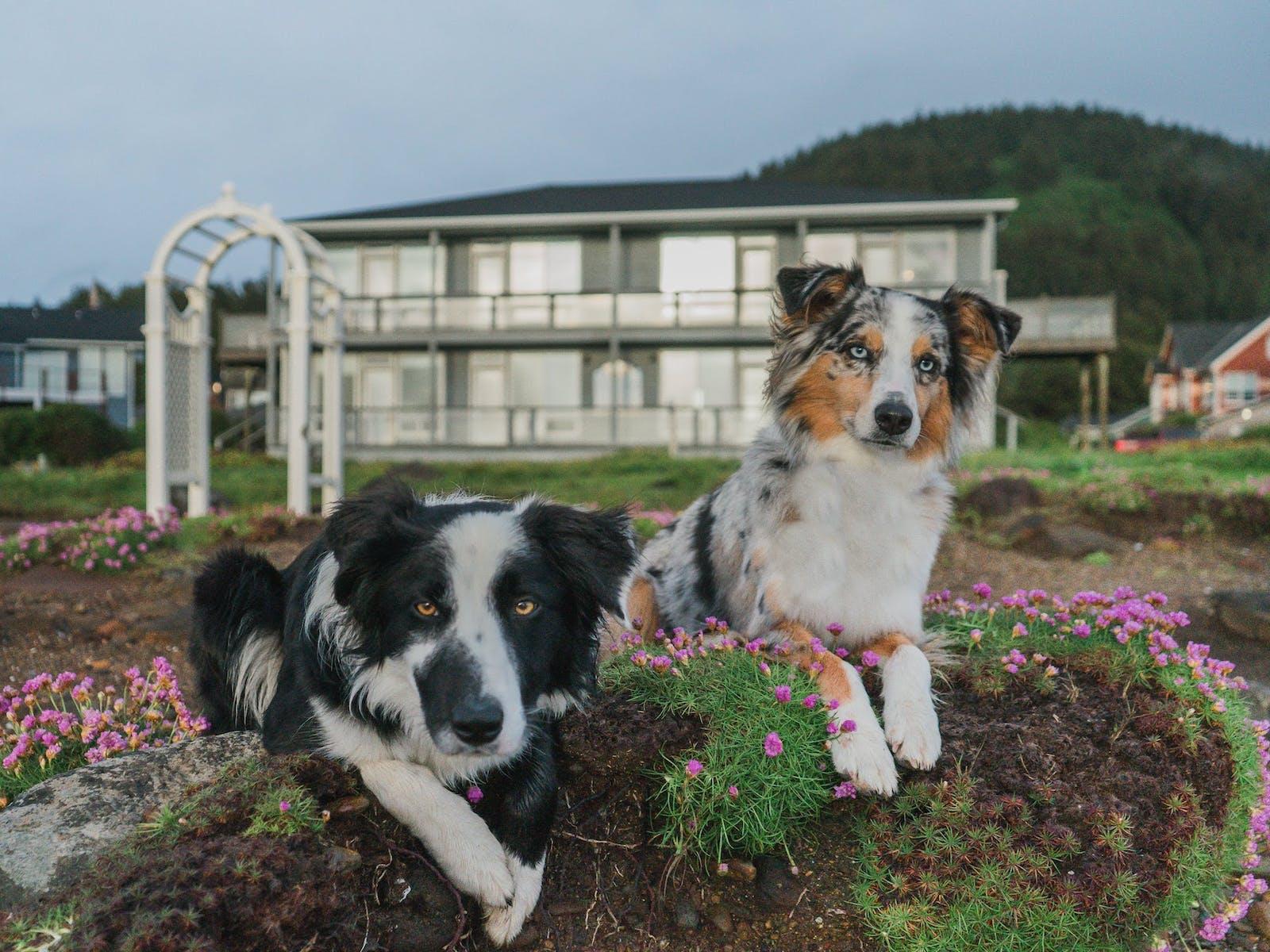 adorable dogs on the oregon coast