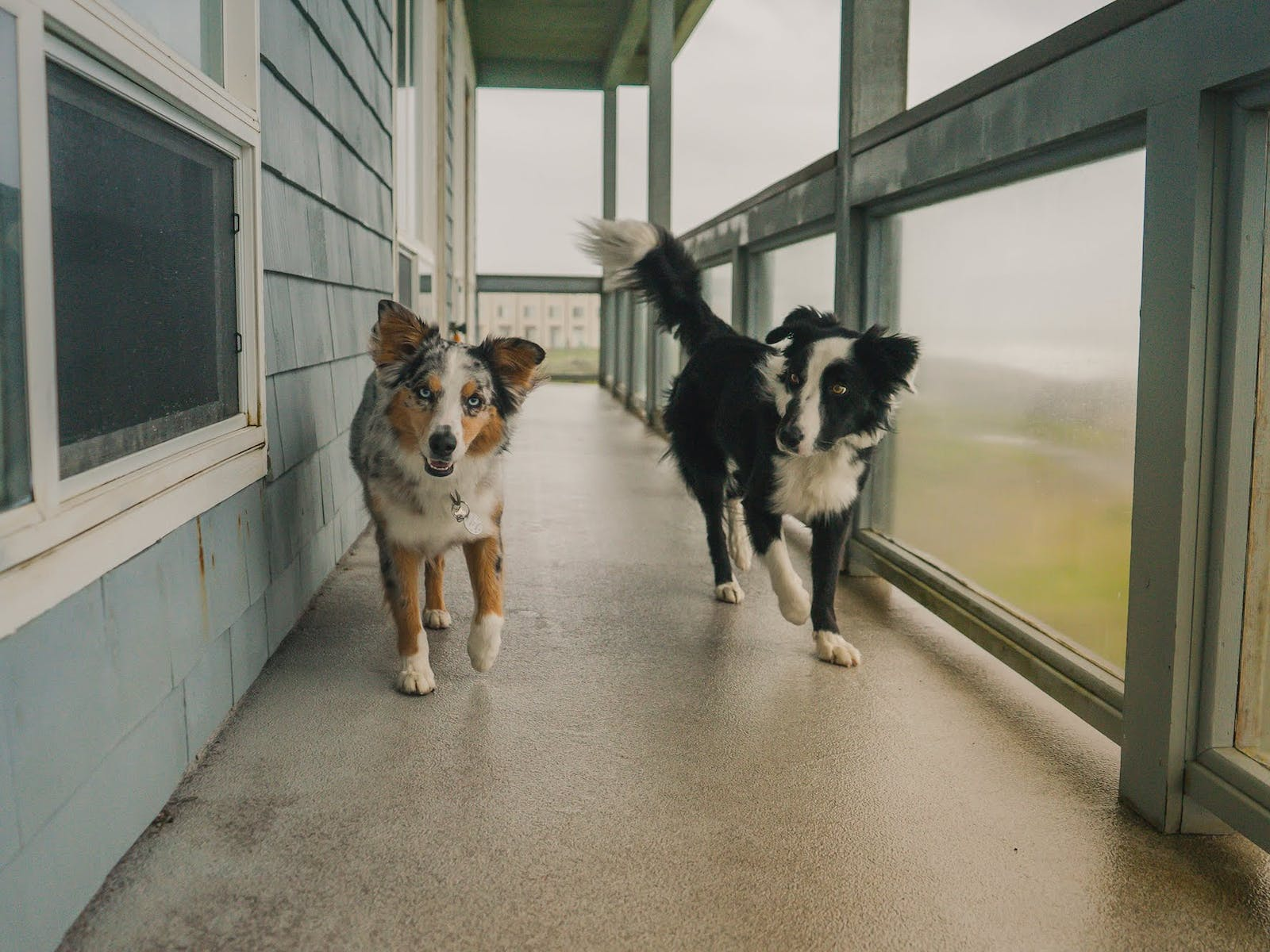 Two dogs at a pet-friendly Oregon coast vacation rental
