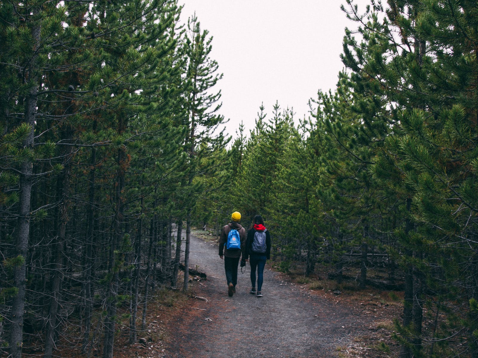 a couple hiking in yellowstone national park