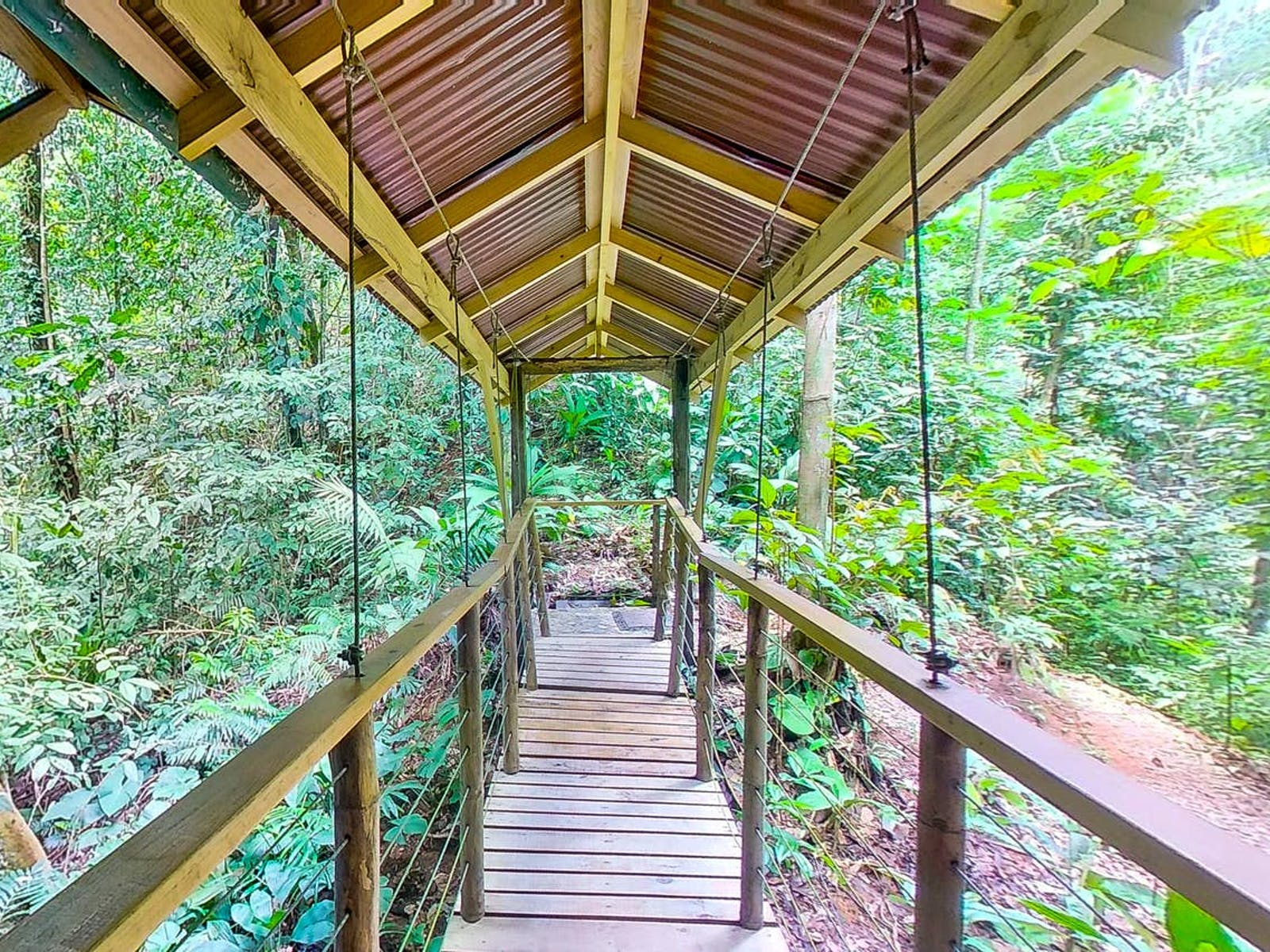 Walkway from tree house rental in Costa Rica extending to a tropical forest