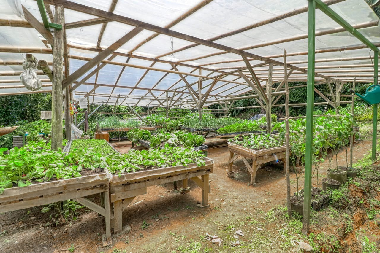 Community garden in Costa Rica