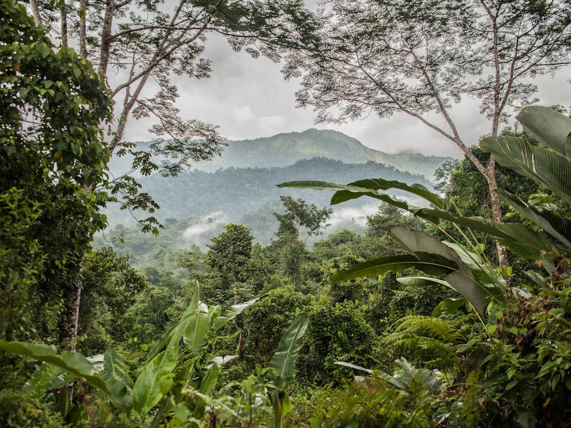 View of the mountains and Costa Rican rainforest from a treehouse rental