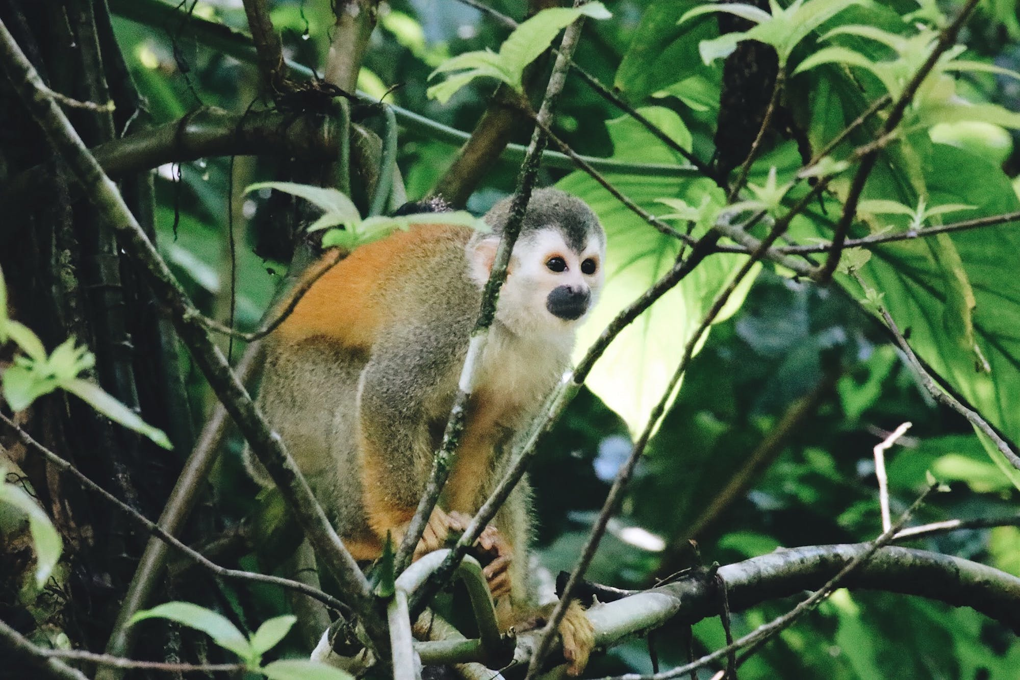 Monkey in a tree