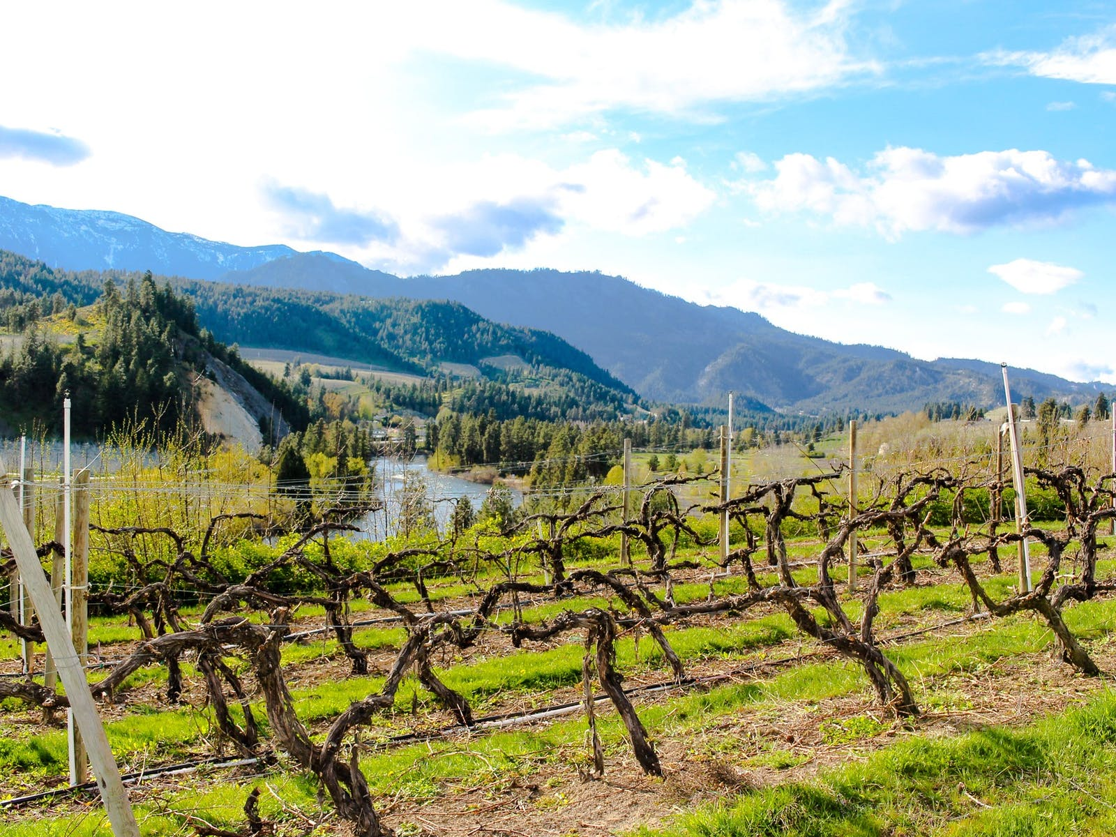 Vineyards in Leavenworth