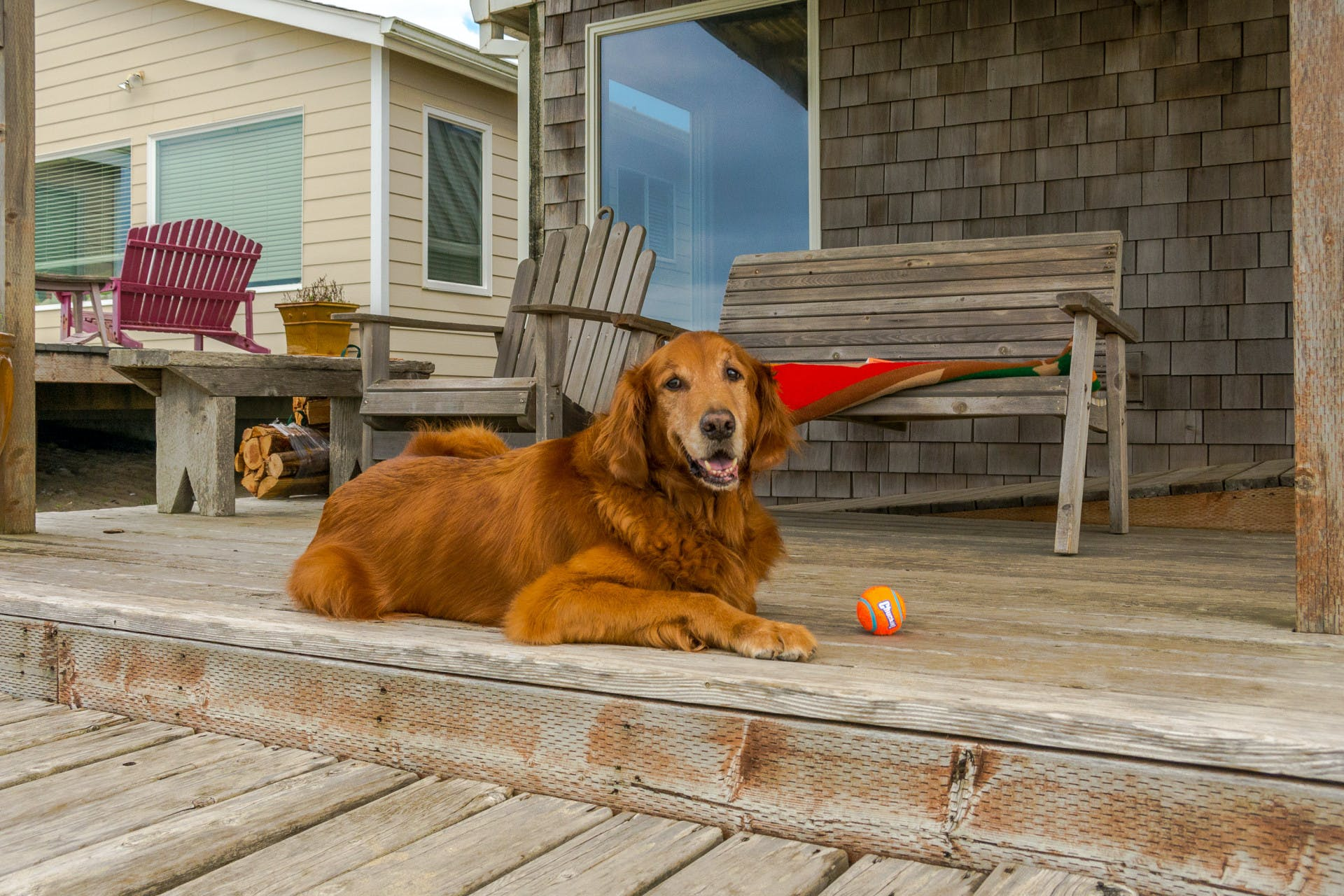 A golden retriever sitting on the porch of an Oregon Coast beach house