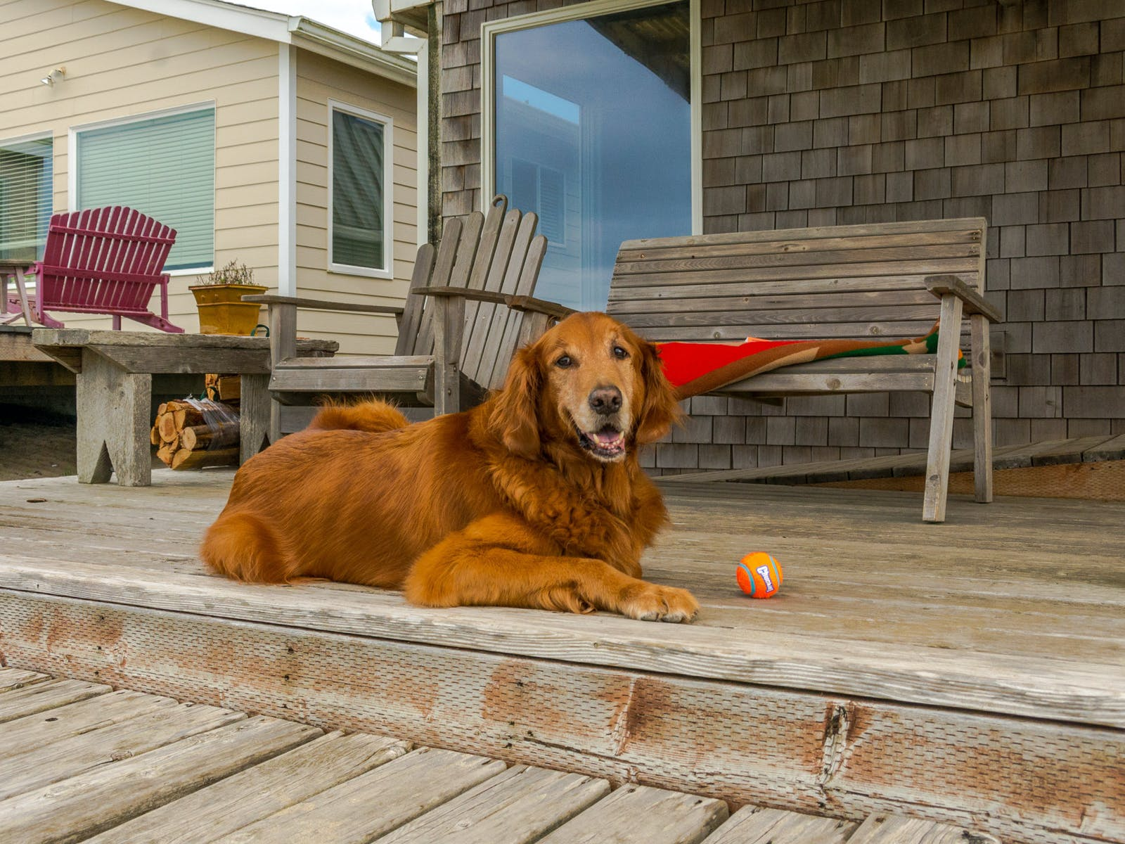 A golden retriever sitting on the porch of an Oregon Coast beach house