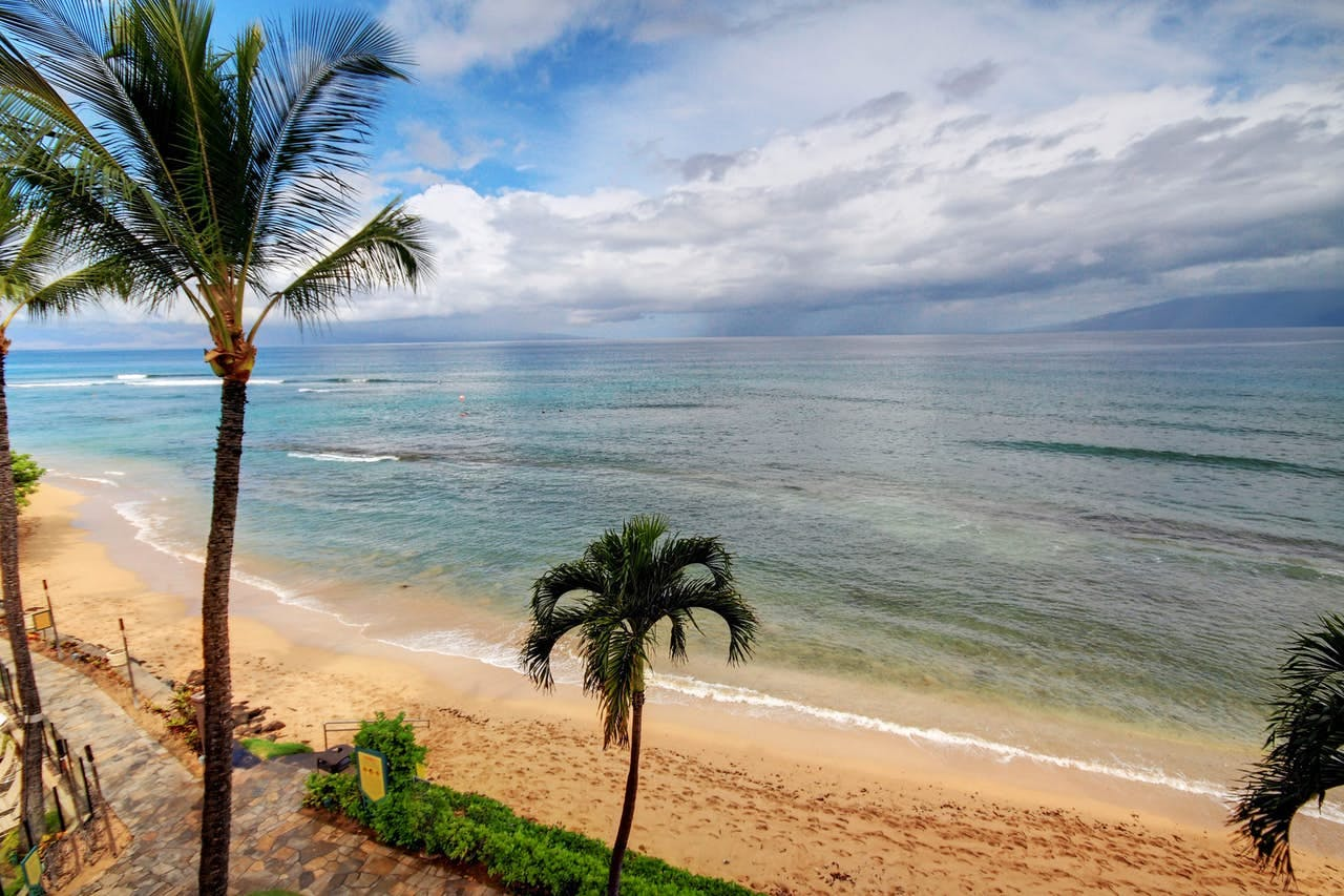 palm trees hanging over the beach at Kaanapali Shores