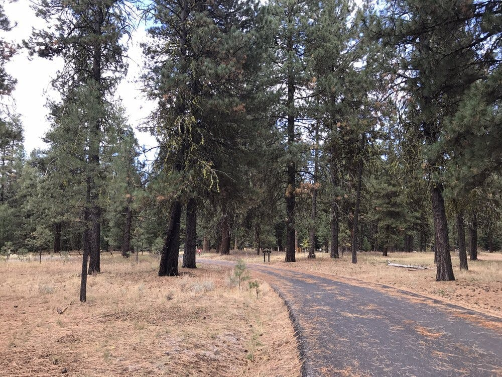 a paved trail leading into Ponderosa State Park