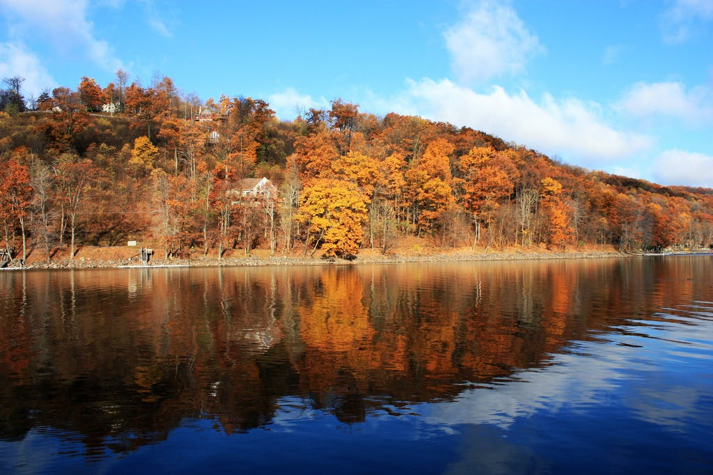 Orange trees in the background of Deep Creek Lake, MD on a fall day