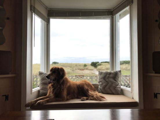 a dog sitting in a window at the oregon coast