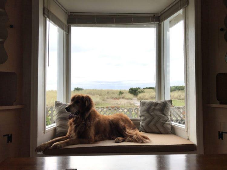 a dog sitting in a window at the oregon coast