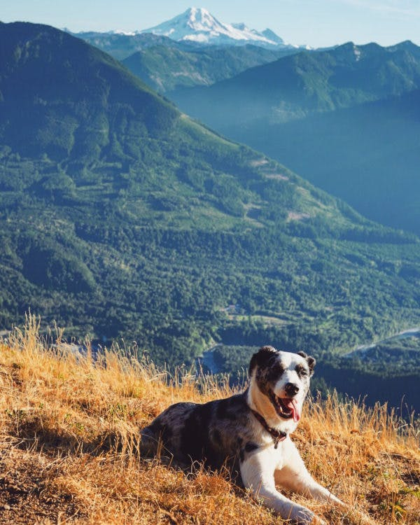a dog on a mountaintop