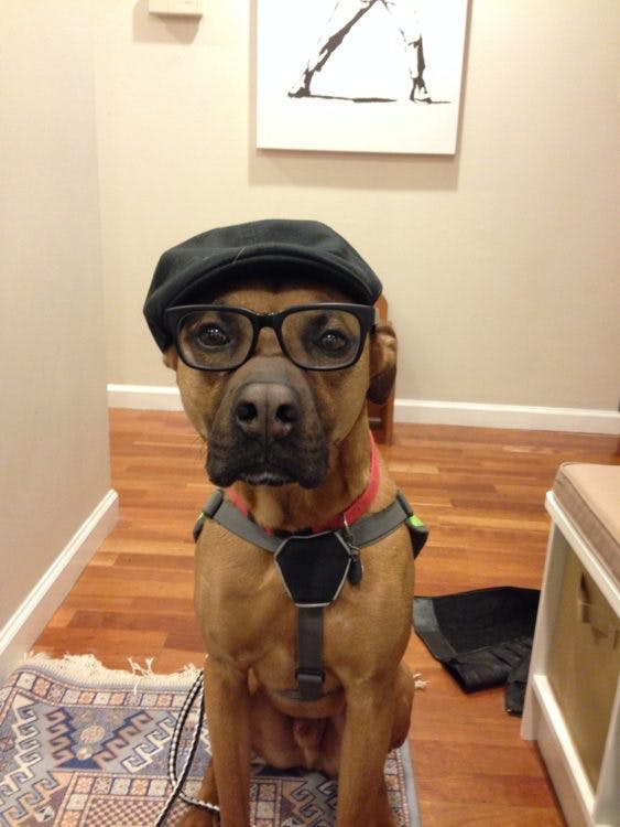 a dog wearing a hat and glasses