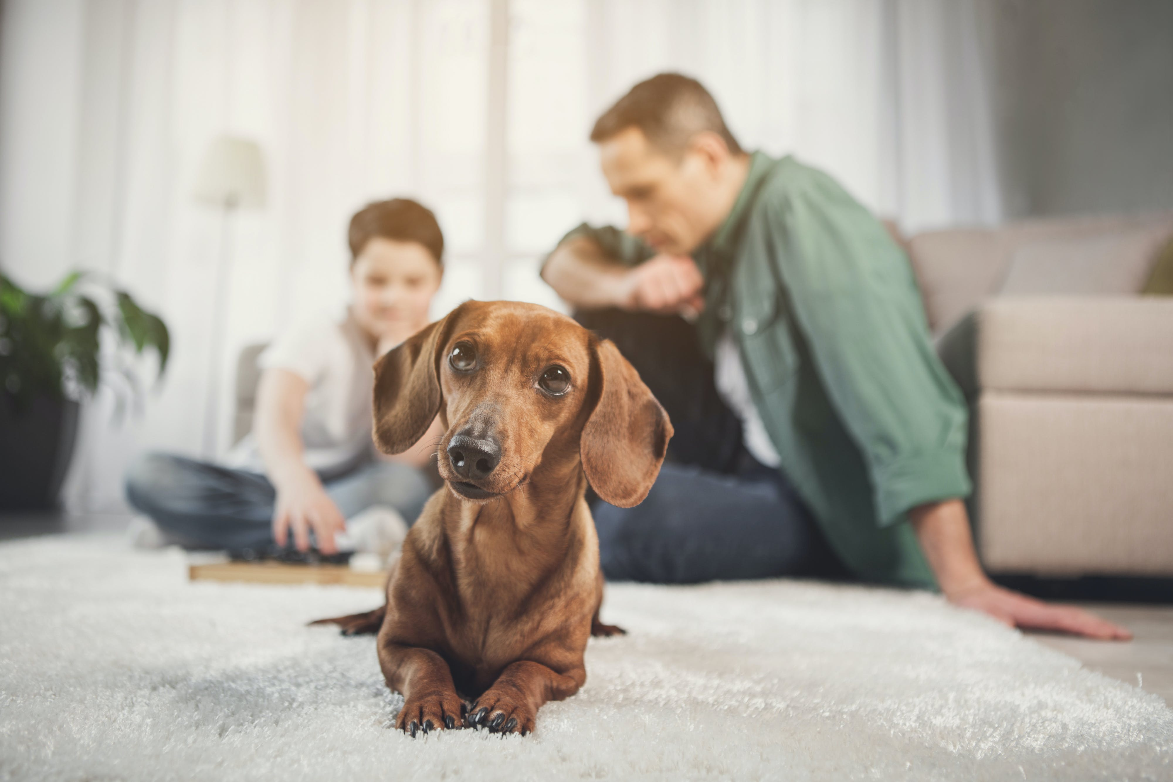dog with its family at their vacation home