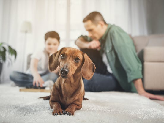 dog next to family playing board games in living area