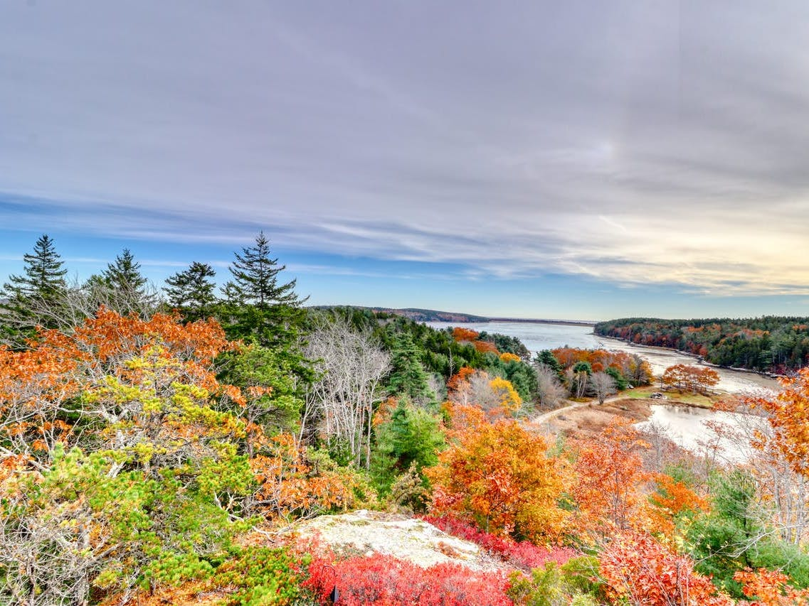 Phippsburg, ME woods during the fall