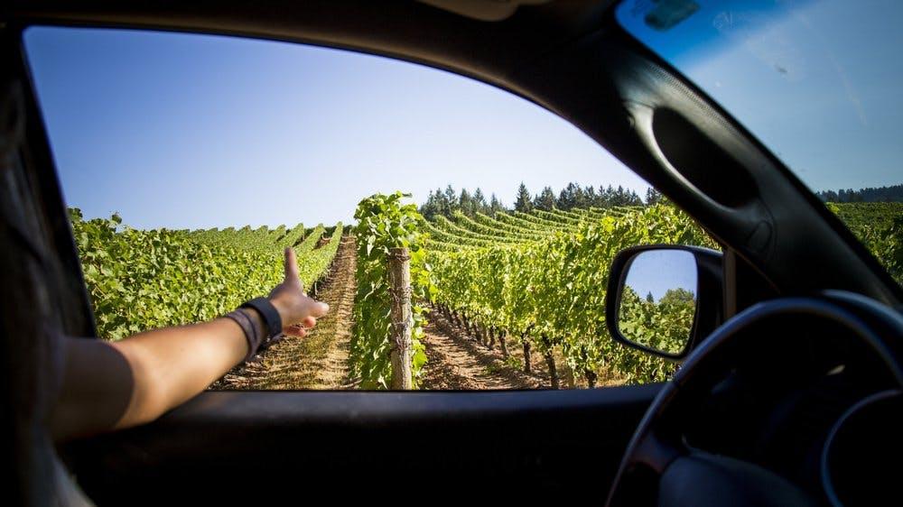 Adelsheim Vineyard located in Oregon Wine Country