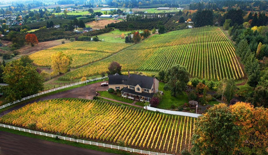 Aerial view of vineyards in Oregon Wine Country