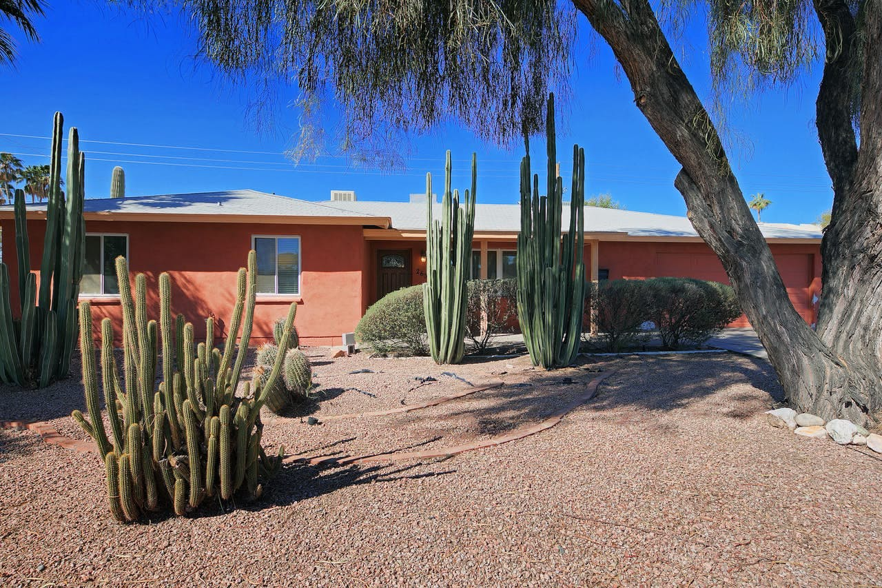 an orange scottsdale home with cactuses throughout the front yard