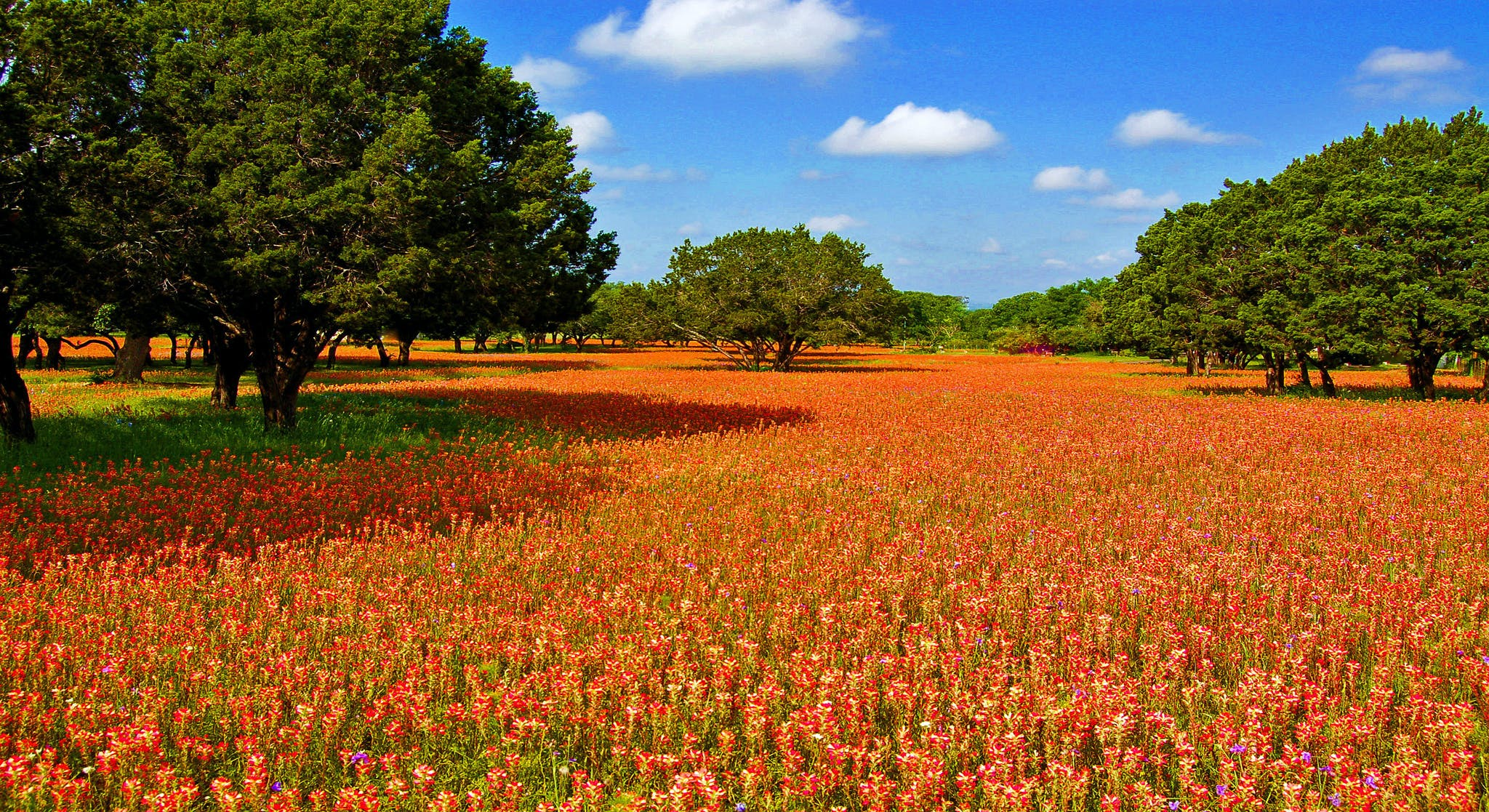 a field of colorful orange flowers on a sunny spring day