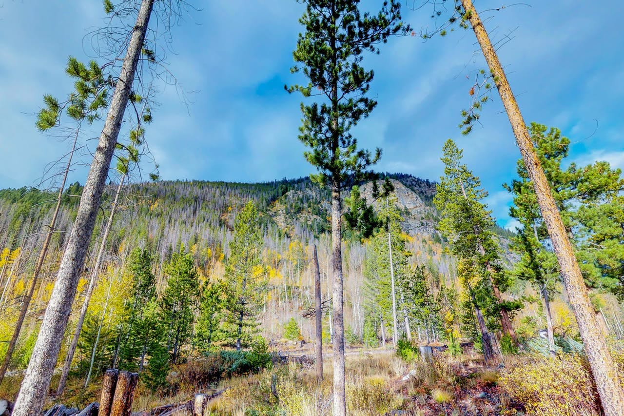 a colorful variety of tree colors in the forest of Frisco, CO