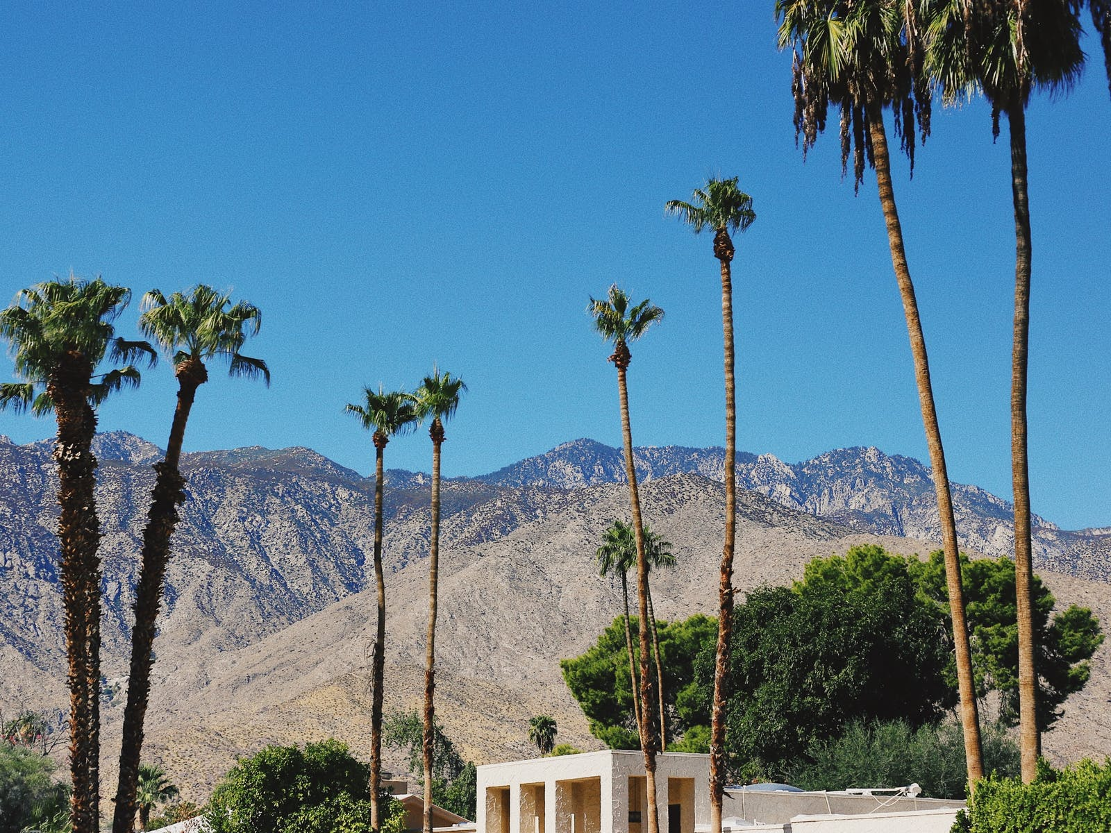 California mountains and palm trees