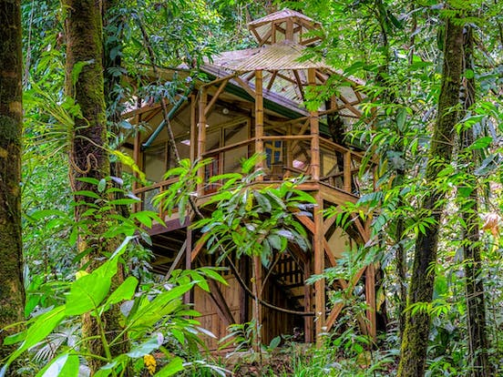 View through the Costa Rican rainforest of a treehouse vacation rental