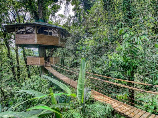 Walkway surrounded by rainforest leading to treehouse vacation rental