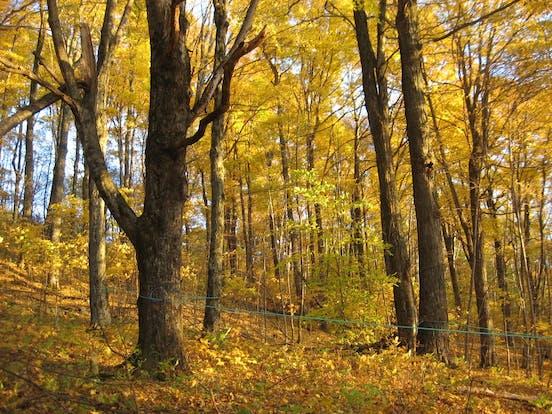 Baird Farm in the fall