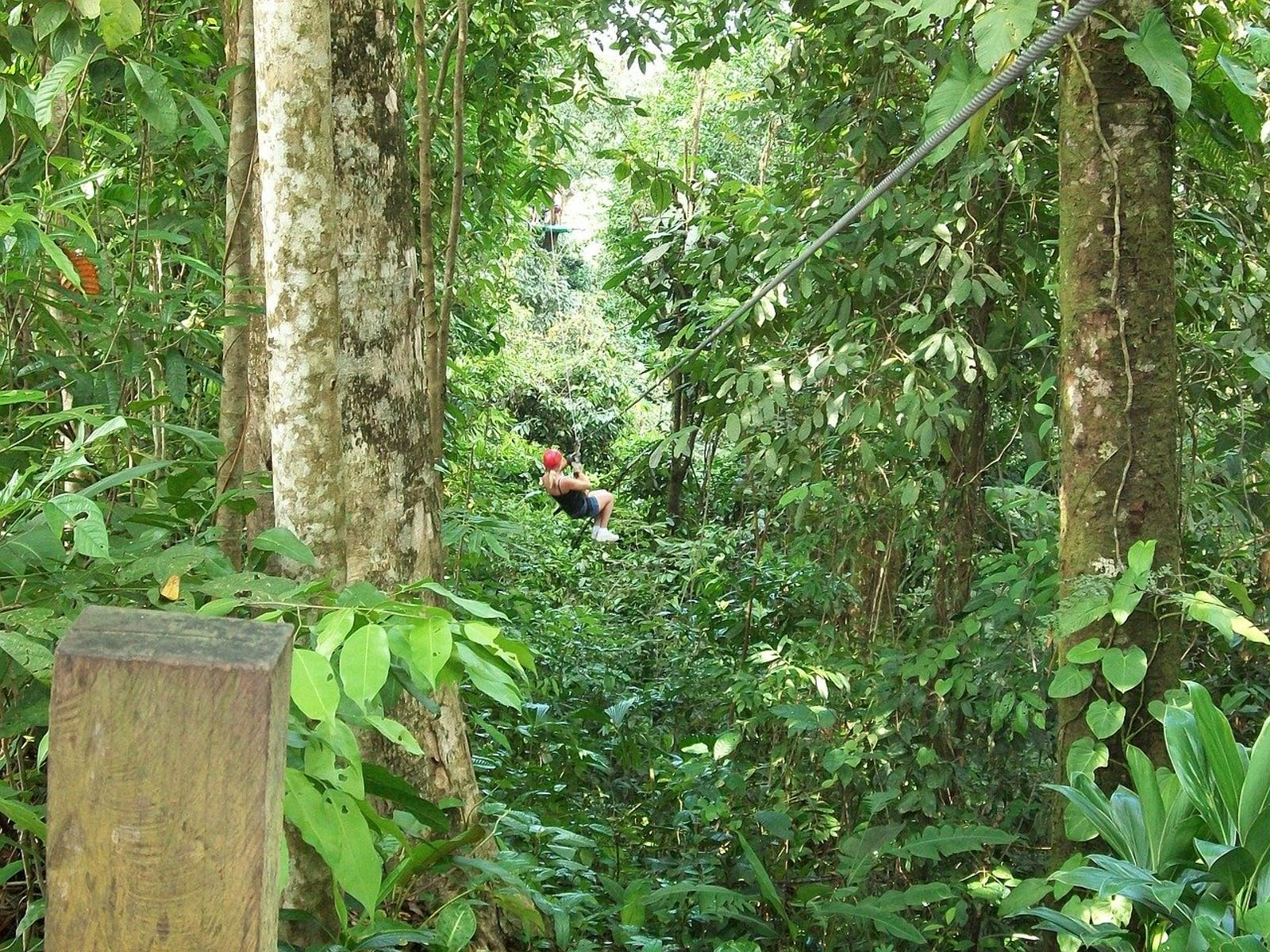 Zipline cutting through the rainforest in Costa Rica